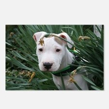 Pit Bull Joey Postcards (Package of 8)