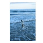Swim Postcards (Package of 8)