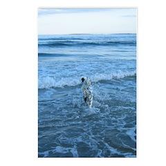 Swim Postcards (Package of 8)