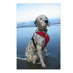 Beach Setter Postcards (Package of 8)