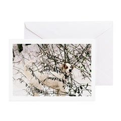 Setter Watercolour Greeting Cards (Pk of 10)