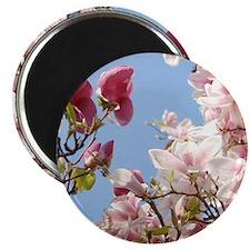"Japanese Magnolias 2.25"" Magnet (10 pack)"