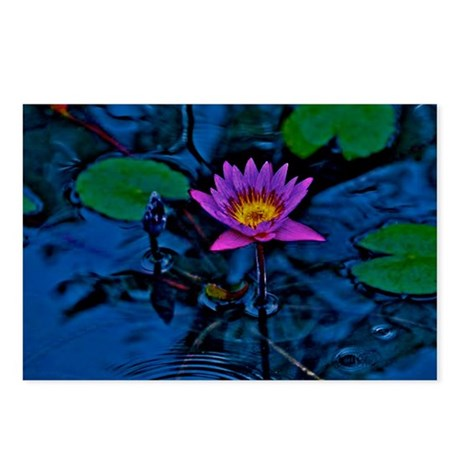 Blue Ruben's Waterlily Postcards (Package of 8)