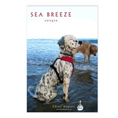 Sea Breeze Cologne Postcards (Package of 8)