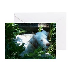 Casey Greeting Cards (Pk of 10)
