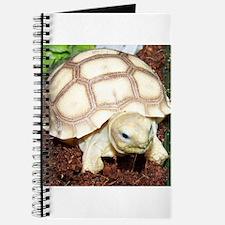 Cute Sulcata tortoise Journal