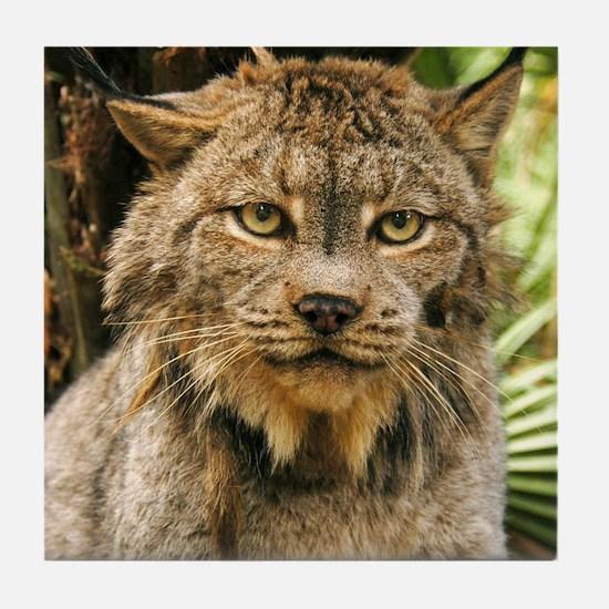 Canadian Lynx Tile Coaster
