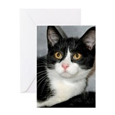 Tuxedo Shelter Cat Greeting Card