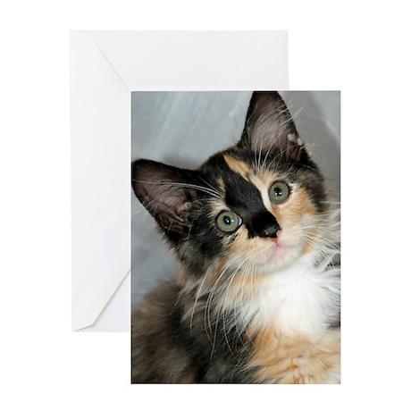 Calico Shelter Kitten Greeting Card