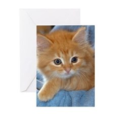 Orange Kitten Greeting Card