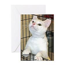 All-White Kitten Greeting Card