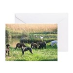 German wirehaired Pointer Cards