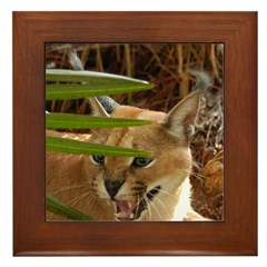 Caracal Lynx Framed Tile