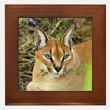 Caracal Lynx Framed Tile