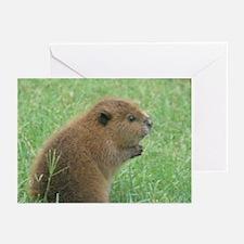 Cute Beaver Greeting Cards (Pk of 10)