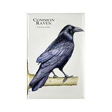 Common Raven Rectangle Magnet