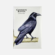 Common Raven Rectangle Magnet