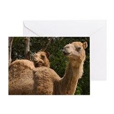 2 Camels Greeting Card