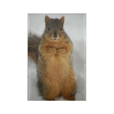 Squirrel Love Rectangle Magnet