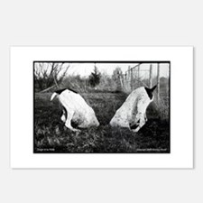 GSP Dogs in a Hole Postcards (Package of 8)