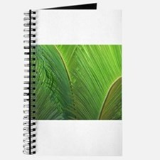 Cycad Leaves Up Close Journal