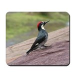 Acorn Woodpecker Mousepad