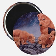 Norfolk Terriers Magnet
