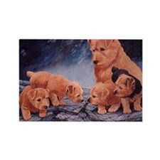 Norfolk Terriers Rectangle Magnet (100 pack)