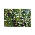 Wine Country California Olives Magnets 100