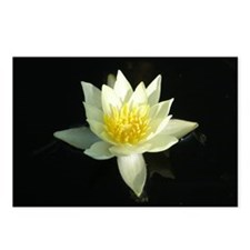 White lotus flower Postcards (Package of 8)