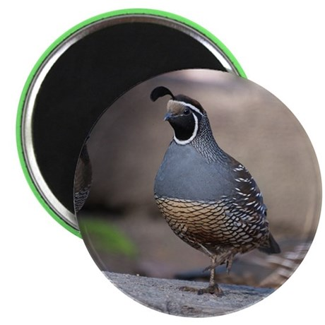 "California Quail 2.25"" Magnet (10 pack)"