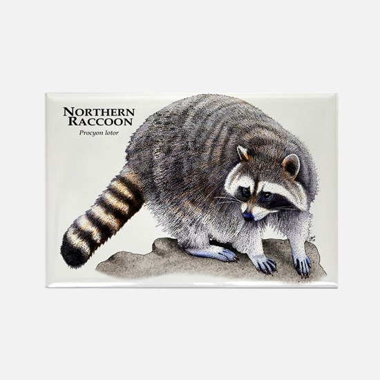 Northern Raccoon Rectangle Magnet