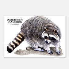 Northern Raccoon Postcards (Package of 8)