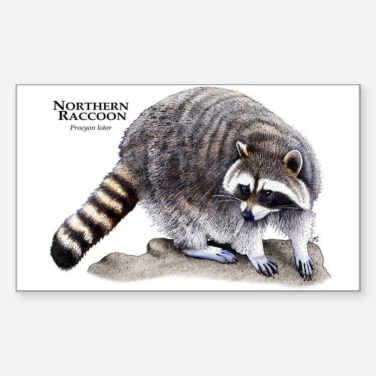 Northern Raccoon Rectangle Decal
