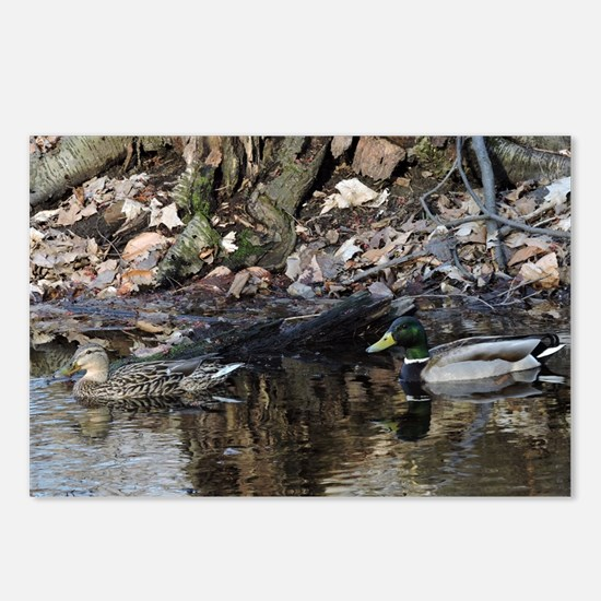 Funny Wood ducks Postcards (Package of 8)