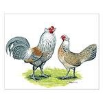 Ameraucana Chicken Pair Small Poster