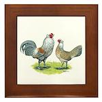 Ameraucana Chicken Pair Framed Tile