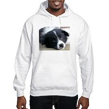 Border Collie Pup Gazing Hoodie