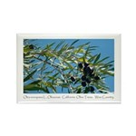 Wine Country Botanical Gifts Olives Magnets -10
