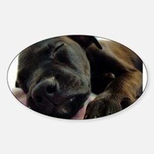 Sleeping Puppy Oval Decal