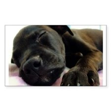 Sleeping Puppy Rectangle Decal