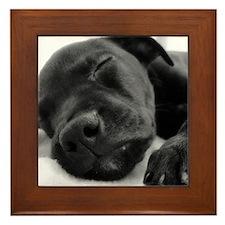 Sleeping Puppy Framed Tile