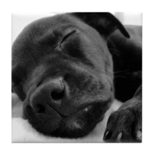 Sleeping Puppy Tile Coaster
