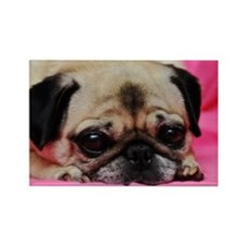 Pug Rectangle Magnet (100 pack)