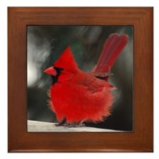 Male Cardinal Framed Tile