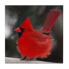 Male Cardinal Tile Coaster