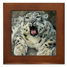 Snow Leopards Framed Tile