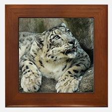 Snow Leopards Framed Tile
