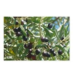 wine country olives Postcards (Package of 8)
