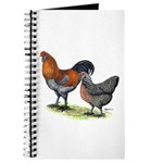 Ameraucana Poultry Journal